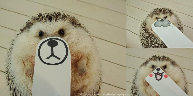 Hedgehog Impersonations