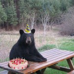 Bear Wearing a Party Hat