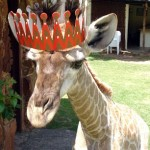 Giraffe Wearing a Party Hat