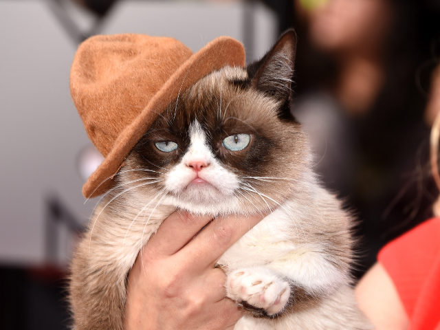 Grumpy Cat Wearing Pharrell's Hat