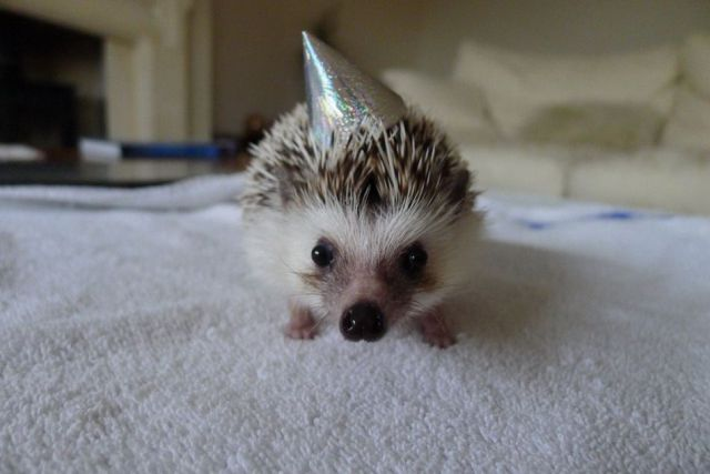Sloth in party hat - photo#20