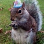 Squirrel Wearing a Party Hat