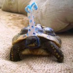 Turtle Wearing a Party Hat
