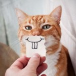 Cats With Paper Smiles