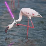 Flamingo With A Lightsabers