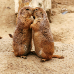 Gophers Hugging