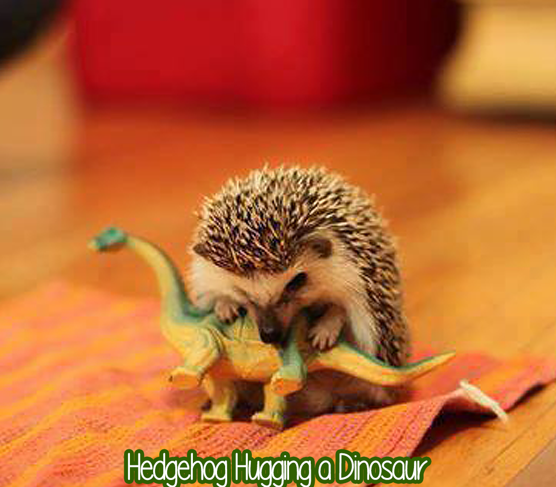 Randomly Cute Hedgehog Hugging A Dinosaur Yayomg