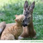 Kitten Hugging a Deer