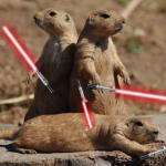 Prairie Dogs With Lightsabers