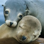 Seals Hugging