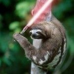 Sloth With A Lightsaber