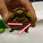 Turtle With A Lightsaber