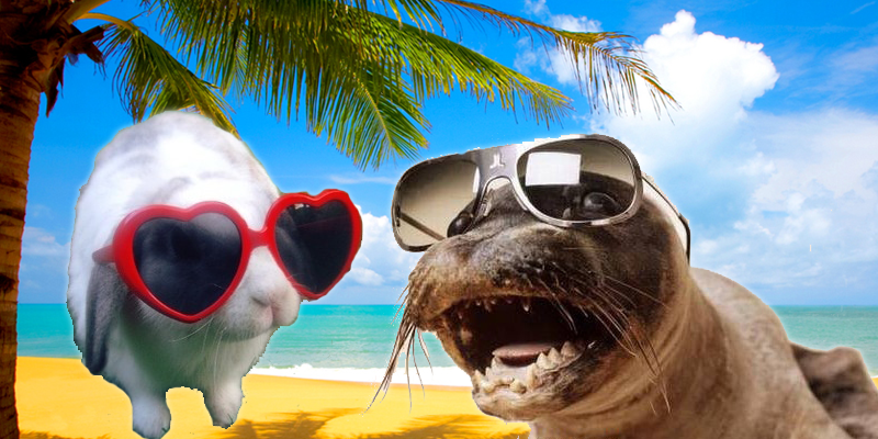 Animals Wearing Sunglasses
