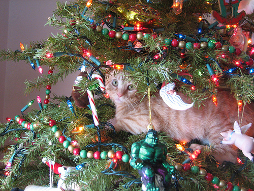 Cats Who Love Christmas