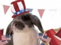 Patriotic Bunny - 4th of July