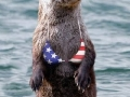 Patriotic Otter - 4th of July